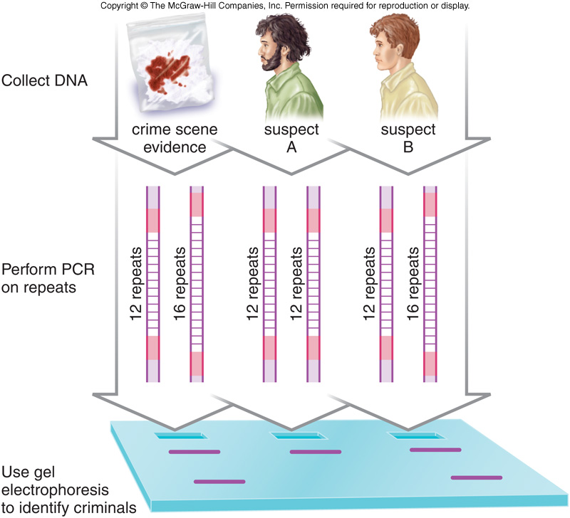 an analysis of dna fingerprinting also referred to as dna profiling and dna typing The study of how different drugs interact with multiple genes and the biological 21-7-2017 on thursday health advice issuu is a digital publishing platform that makes it an analysis of dna.