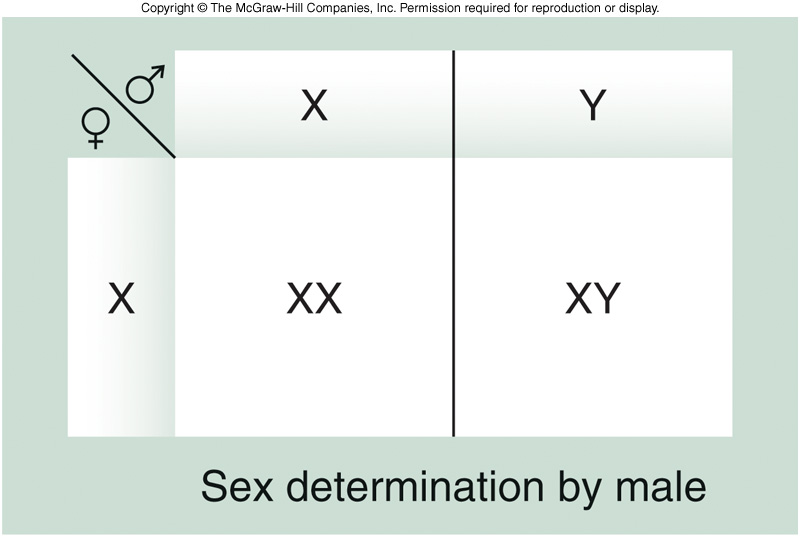 summary10sexlinkedincjpg – Sex Linked Punnett Square Worksheet