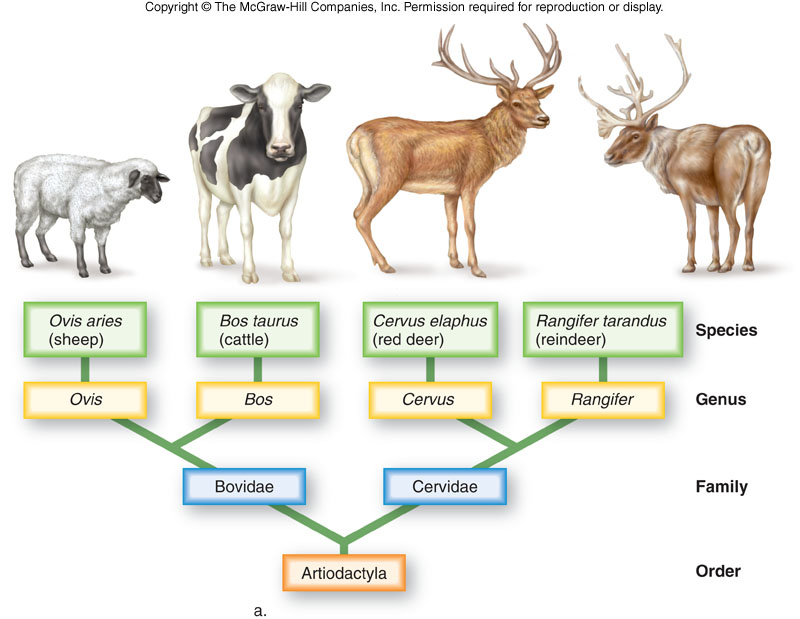 classification of living organisms into categories based on evolutionary and structural relationship Linnaean taxonomy can mean either of two related concepts: the particular form  of biological classification (taxonomy) set up by carl  this rank-based method  of classifying living organisms was originally popularized by  phylogenetic tree  – a way to express insights into evolutionary relationships zoology  categories .
