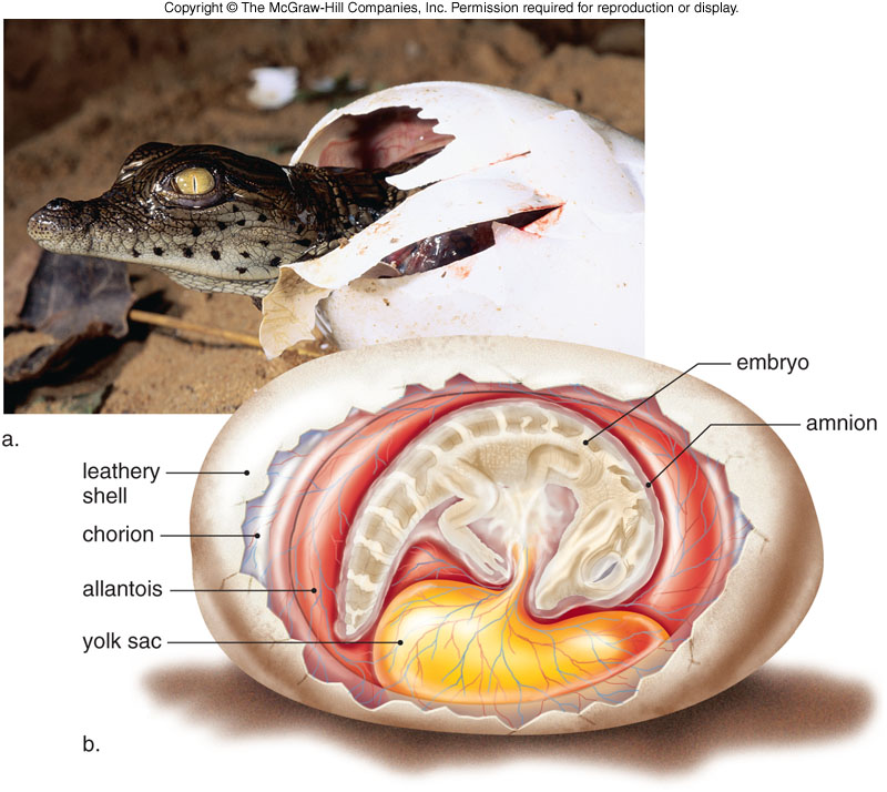 Reptiles That Lay Eggs f19-31_reproduction_on...