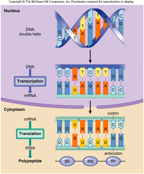 structure and function of dna and rna pdf