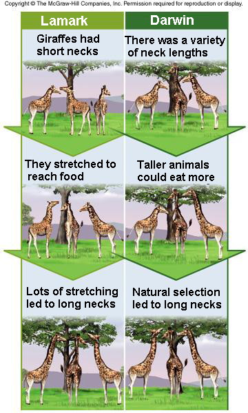 Difference Between Evolution Adaptation And Natural Selection
